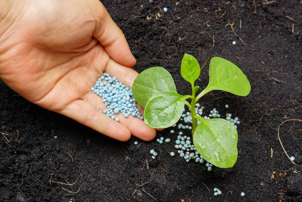 hand giving fertilizer to a young plant with warm sunlight / planting tree